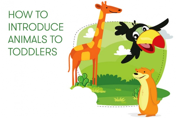8 ways to introduce animals