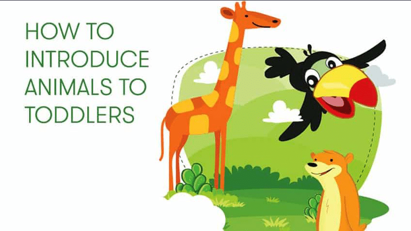 How to introduce Animals to Preschoolers?